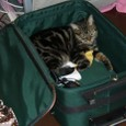Meg_in_baggage
